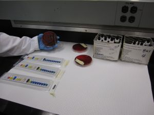 Microbiology station for CSI Michener